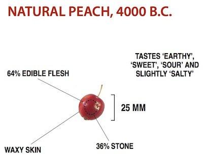 wild-peach