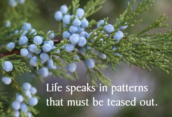 Life speaks in patterns that must be teased out
